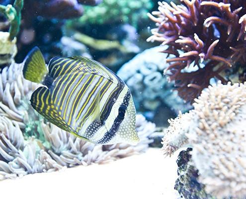 galerie-aquarium-1