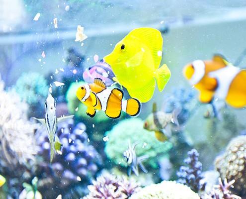 galerie-aquarium-11