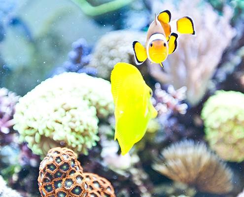 galerie-aquarium-12