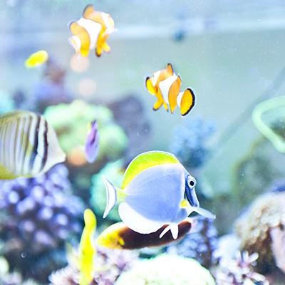 galerie-aquarium-13