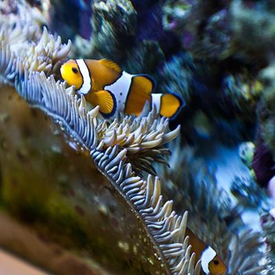 galerie-aquarium-14
