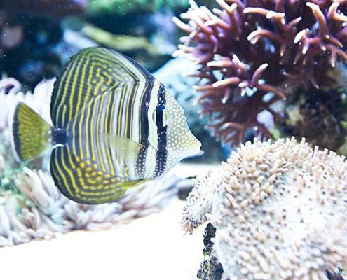 galerie-aquarium-4