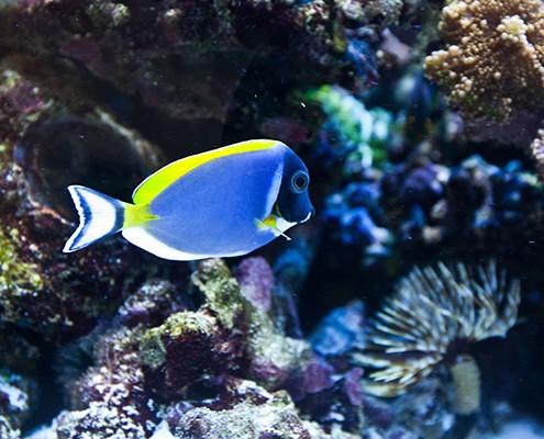 galerie-aquarium-5