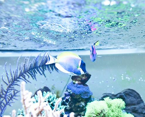 galerie-aquarium-6