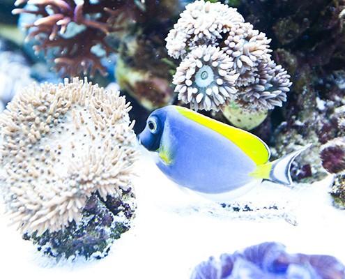 galerie-aquarium-7