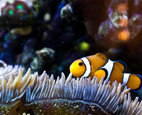 galerie-aquarium-9